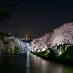 桜 2015(Cherry tree 2015)-025