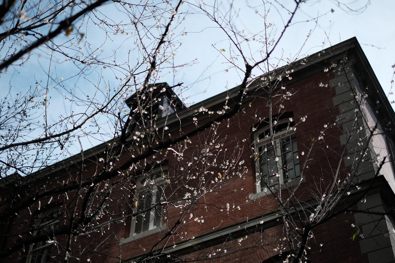 ブリックスクエア内の木には、花が咲いていた