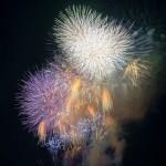 第39回 江戸川区花火大会(The 39th Edogawa-ku fireworks display)-011