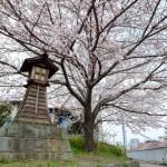 桜 2015(Cherry tree 2015)-006