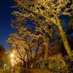 桜 2015(Cherry tree 2015)-020