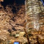 桜 2015(Cherry tree 2015)-002