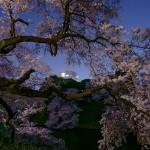 桜 2015(Cherry tree 2015)-022