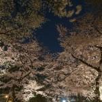 桜 2015(Cherry tree 2015)-026