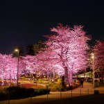 桜 2015(Cherry tree 2015)-004