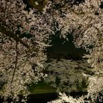 桜 2015(Cherry tree 2015)-024