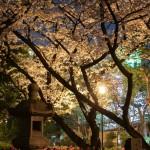 桜 2015(Cherry tree 2015)-019