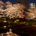 桜 2015(Cherry tree 2015)-001