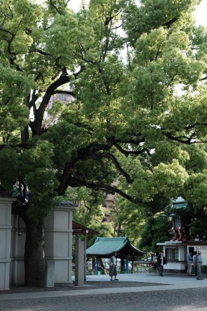 富岡八幡宮 境内の樹木