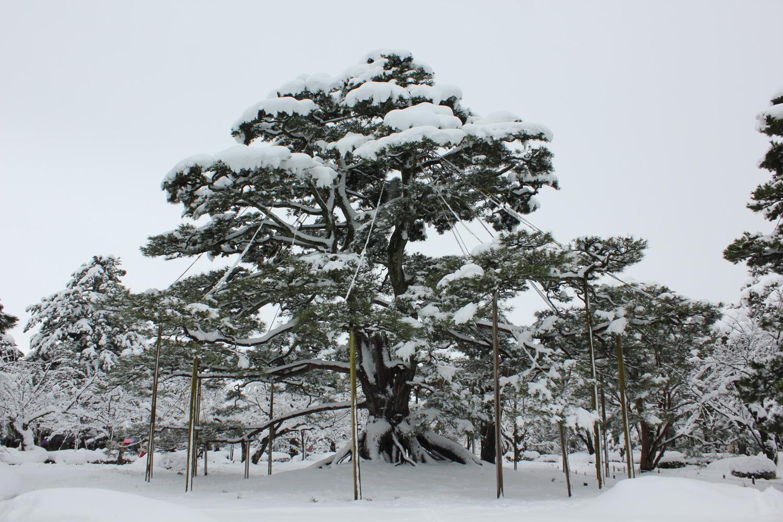 金沢 兼六園(Kanazawa Kenroku-en)-12